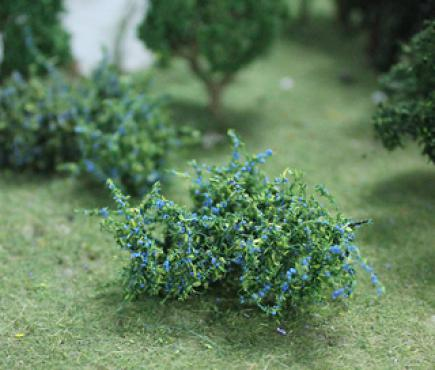 Blueberries Plants